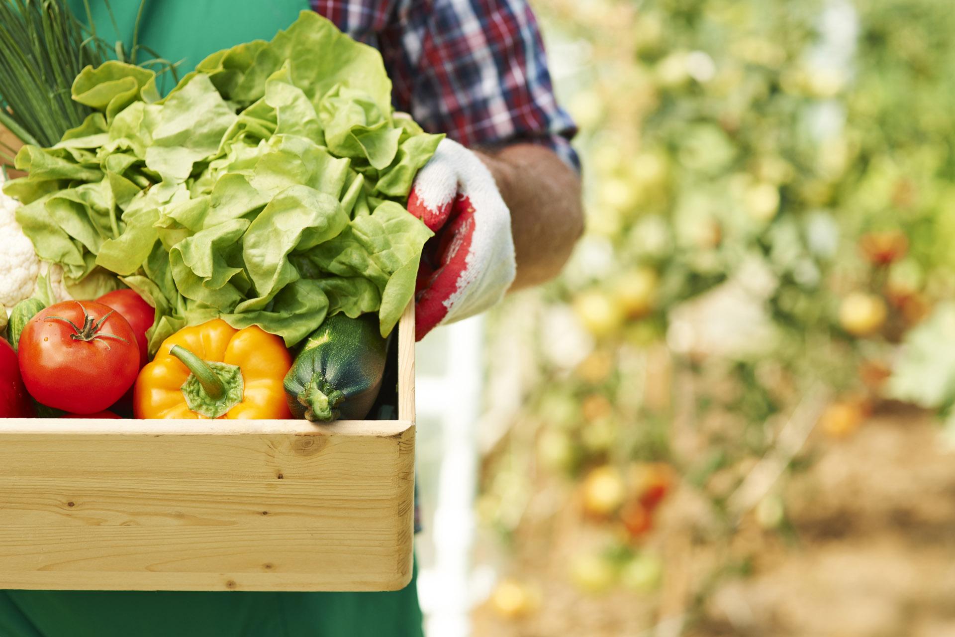 Prikupljenim zekatom na poljoprivredne proizvode pomognut rad javnih kuhinja, bolnica i humantiranih organizacija