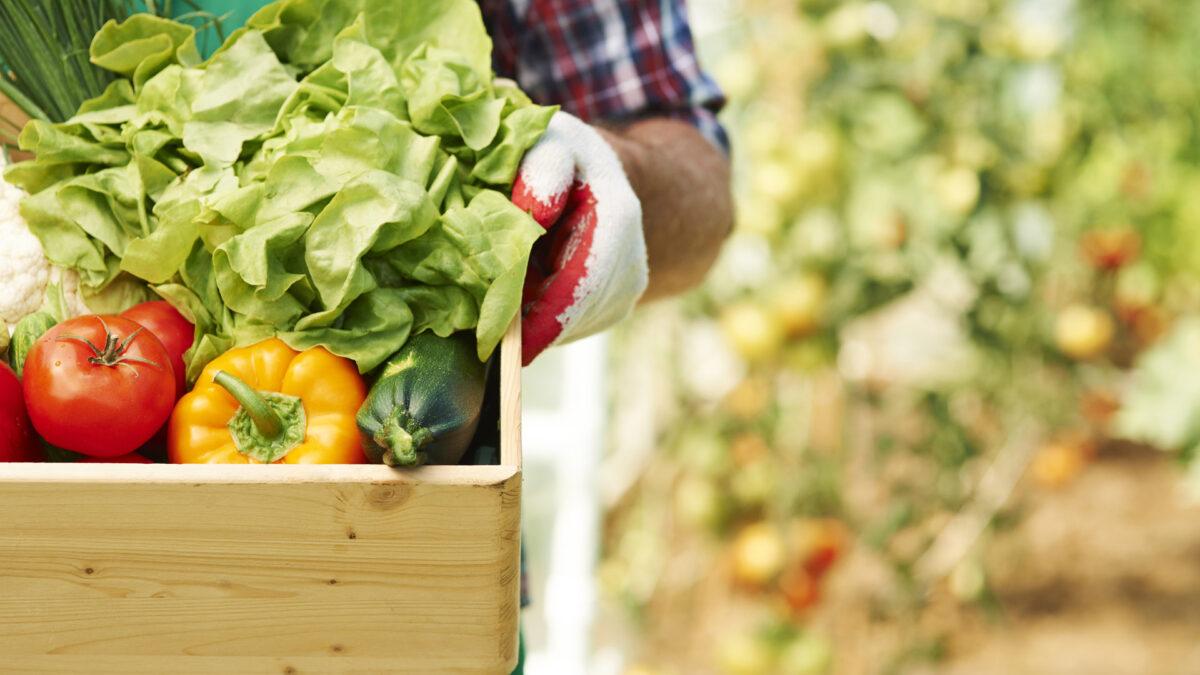 Zekat na poljoprivredne proizvode – Akcija prikupljanja od 8. do 17. oktobra